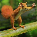 Аватар Белка приняла стойку для прыжка с перил