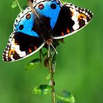 Аватар Яркая бабочка на стебле