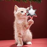Аватар Котенок трогает лапкой звезду, висящую на елке