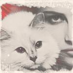 Аватар Красивая девушка и белая кошка