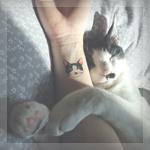 Аватар Кошка прижалась к женской руке с тату