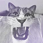 Аватар Котик выглядывает из-за рисунка с оскалом льва