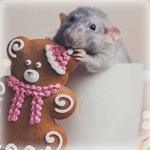 Аватар Мышонок сидит в кружке и грызет печенье в виде мишки