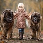 Аватар Девочка стоит между своими собаками