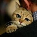 Аватар Кот на плече мужчины