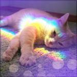 Аватар Кошка в радужных бликах лежит на полу