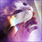 Аватар Рука гладит мордочку кошки