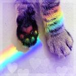 Аватар Кошачьи лапки в радужных бликах