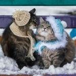 Аватар Два кота в шапочках и шарфах