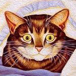 Аватар Полосатый кот с удивленными желтыми глазами