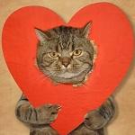 Аватар Кот с надетым на себя сердечком, фотограф Iridi