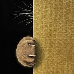 Аватар Лапка кота на стене, фотограф Iridi