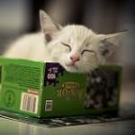 Аватар Белый котенок спит на коробке