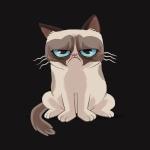 Аватар Обиженный сиамский кот на черном фоне