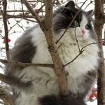 Аватар Пухлый кот сидит на дереве, by Kirmer