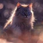Аватар Пушистый кот на фоне бликов