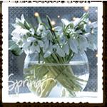 Аватар Подснежники в стеклянной вазе (Spring / Весна)