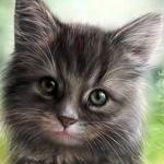 Аватар Милый серый котенок, by NImportant