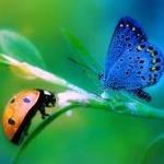 Аватар Бабочка и божья коровка на веточке