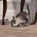 Аватар Крадущийся на полу кот, by Strawberry Singh