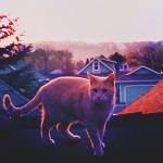 Аватар Кот на крыше во время заката