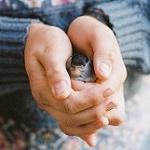 Аватар В руках парня птичка, by Hanne Johansen