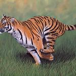 Аватар Тигр на траве