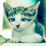 Аватар Маленький котенок лежит на земле, фотограф Essa Al Mazroee