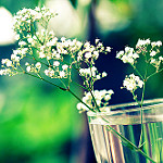 Аватар Баночка с белыми цветами, фотограф Essa Al Mazroee