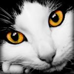 Аватар Черно-белый котик с карими глазами