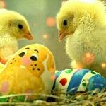 Аватар Цыплята сидят у разукрашенных яиц