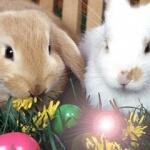 Аватар Кролики сидят в траве рядом с яйцами