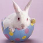 Аватар Белый кролик в скорлупе пасхального яйца