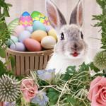 Аватар Кролик сидит рядом с корзинкой пасхальных яиц