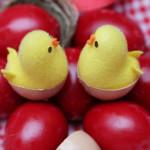 Аватар Два цыпленка в скорлупе на пасхальных яйцах