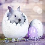 Аватар Кролик в яйце, крашенки и веточка вербы