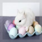Аватар Крольчонок сидит на разноцветных яйцах