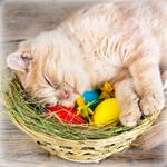 Аватар Бело-рыжий котик спит в лукошке с пасхальными яйцами