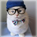 Аватар Котик в синей шапочке, в очках и с бабочкой на шее