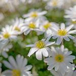 Аватар Белые мелкие цветы