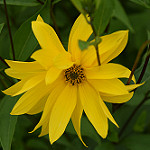 Аватар Желтый цветок среди зеленых листьев