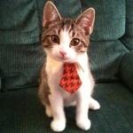 Аватар Котенок в галстуке сидит на диване