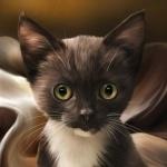 Аватар Черно-белый котенок с зелеными глазами