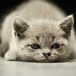 Аватар Грустный котенок лежит на полу