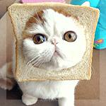 Аватар Котик Снупи с кусочком хлеба на мордочке