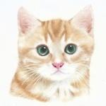 Аватар Полосатый котенок на белом фоне