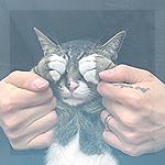 Аватар Котик закрывает лапами мордочку