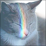 Аватар Кошка с радужным бликом на мордочке