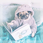 Аватар Мопс в очках и плюшевой пижаме удобно устроился в постели с книгой