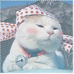 Аватар Ширанеко в косынке на мордочке смотрит в сторону